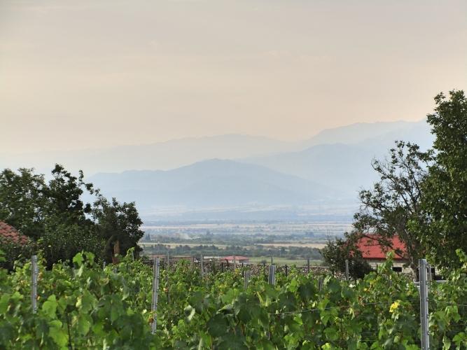 Georgien Weinreise – Im Ursprungsland des Weins