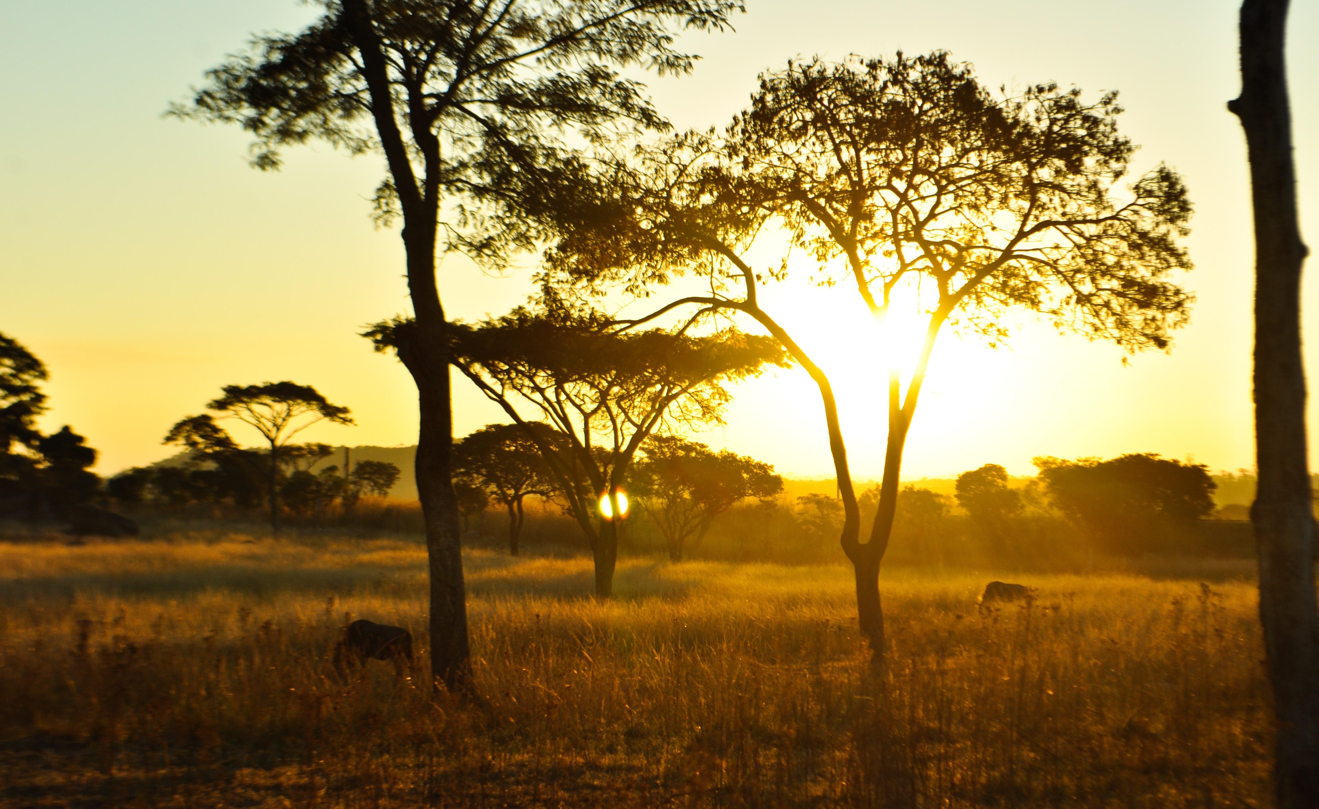 kleingruppen safaris botswana im reich der wilden tiere. Black Bedroom Furniture Sets. Home Design Ideas
