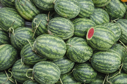 Wassermelonen - Mekongdelta - Vietnam