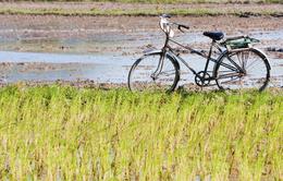 Fahrrad - Mekongdelta - Vietnam