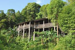 Regenwald - Iban Langhaus - Borneo Malaysia