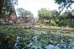 Seerosen - Ubud - Bali