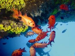 Unterwasserwelt - Kap Verde - Afrika Urlaub