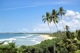 Strand - Palmen - Sri Lanka Reisen