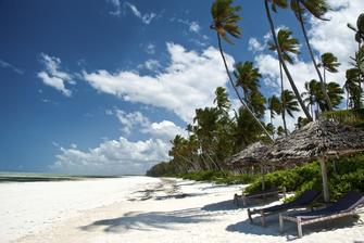 Strand mit Palmen im Tansania Urlaub