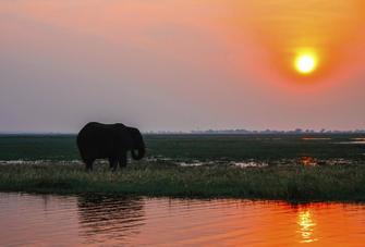 Elefant im Chobe Nationalpark in Botswana