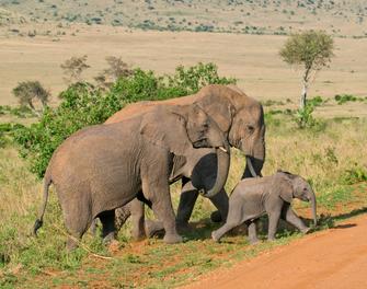 Elefantenwaisenhaus in Kenia