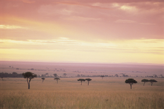 Landschaft des Masai Mara Nationalparks in Kenia