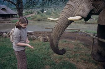 Elefanten hautnah im Daphne Sheldrick Elefanten Waisenhaus in Nairobi in Kenia