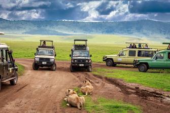 Tiere bei Ihrer Pirschfahrt im Ngorongoro Krater in Tansania