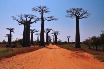 Affenbrotbäume bei Safari im Tarangire Nationalpark in Tansania.