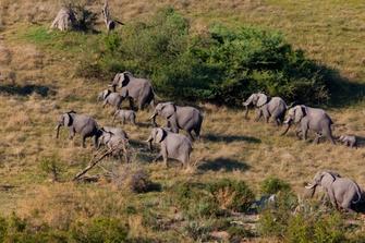 Elefanten im Tarangire Nationalpark in Tansania