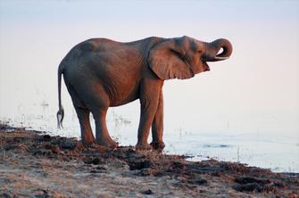 Elefant am Lake Ndutu im Ngorongoro-Schutzgebiet in Tansania.