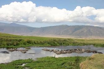 Flusspferde bei einer Safari im Ngorongoro Krater in Tansania.