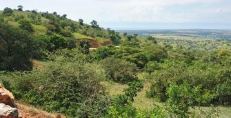 Landschaft am Albertine Rift Valley in Uganda