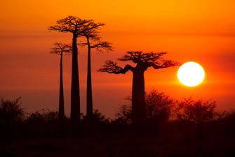 Ende der Madagaskar-Reise in Antananarivo