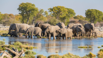 Safari im Etosha Nationalpark in Namibia