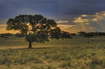 Landschaft in der Kalahari Wüste in Namibia