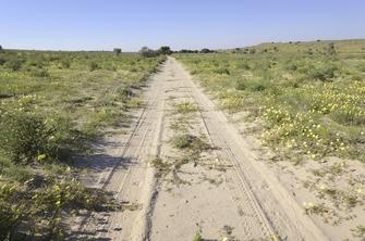 Fahrt von der Kalahari Wüste in die Onjala Lodge in Namibia wo entspannte Massagen warten.
