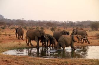 Elefanten im Wasser im Ruaha Nationalpark in Tansania