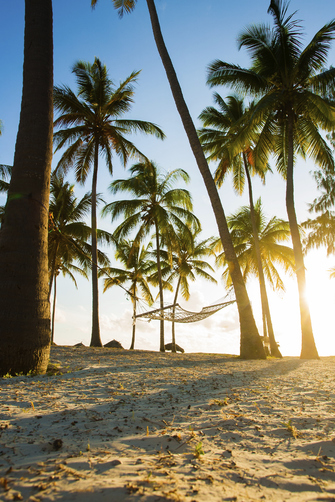 Palmen am Strand von Sansibar in Tansania