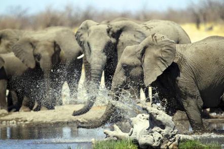 Namibia Gruppenreise - Namibia Botswana Rundreise - Elefanten am Wasserloch - Namibia Safari