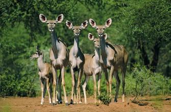 Namibia Gruppenreise - Namibia Geführte Reise - Namibia Kleingruppenreise - Kudus - Tiras