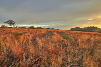 Namibia Geführte Reise - Namibia Safari - Sonnenuntergang in der Savanne - Namibia