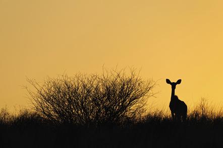 Namibia Botswana Rundreise - Namibia Familienurlaub - Antilope im Sonnenuntergang