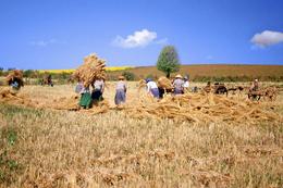 Farmarbeit - Mandalay - Myanmar