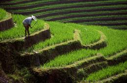 Farmarbeiter auf Reisterrassen Zentralbali - Bali Indonesien