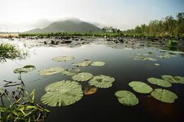 Lotusbluete - Chau Doc - Vietnam