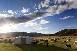 Ger und Weide - Mongolei