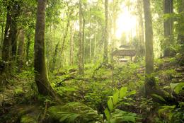 Regenwald - Borneo - Malaysia