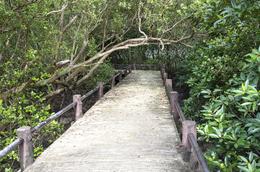 Wald - Phu Wiang-Nationalpark - Thailand