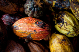 Kakaobohnen - Sao Tome e Principe - Reisen