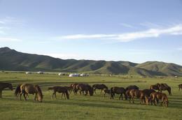 Pferde - Jurtencamp - Mongolei