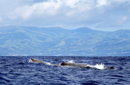 Wale Portugal